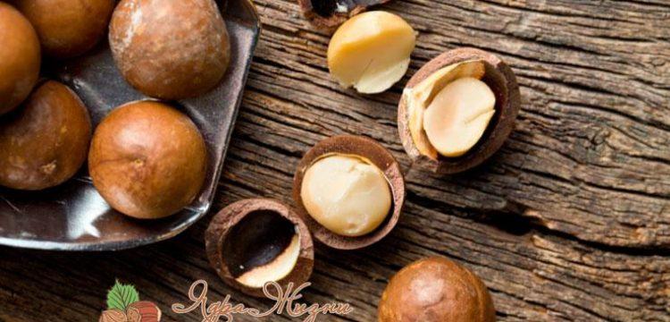 Миниатюра к статье Королевский орех Макадамия и его полезные свойства, о которых вы могли не знать