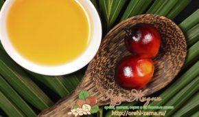 Миниатюра к статье Всё о пальмовом масле: состав, технология производства, отличительные свойства, из чего делают, применение и чем опасно