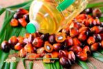 Миниатюра к статье Температура плавления пальмового масла и как растворить и вывести из организма модифицированное фракционное масло из организма человека