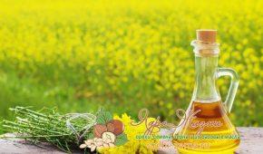 Миниатюра к статье В чем полезные свойства рапсового масла, описание и применение в разных сферах